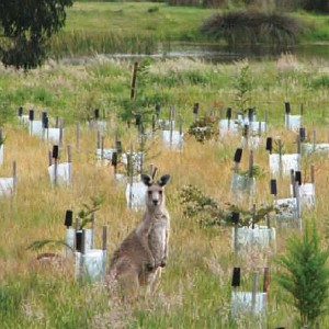 Kangaroo lcg