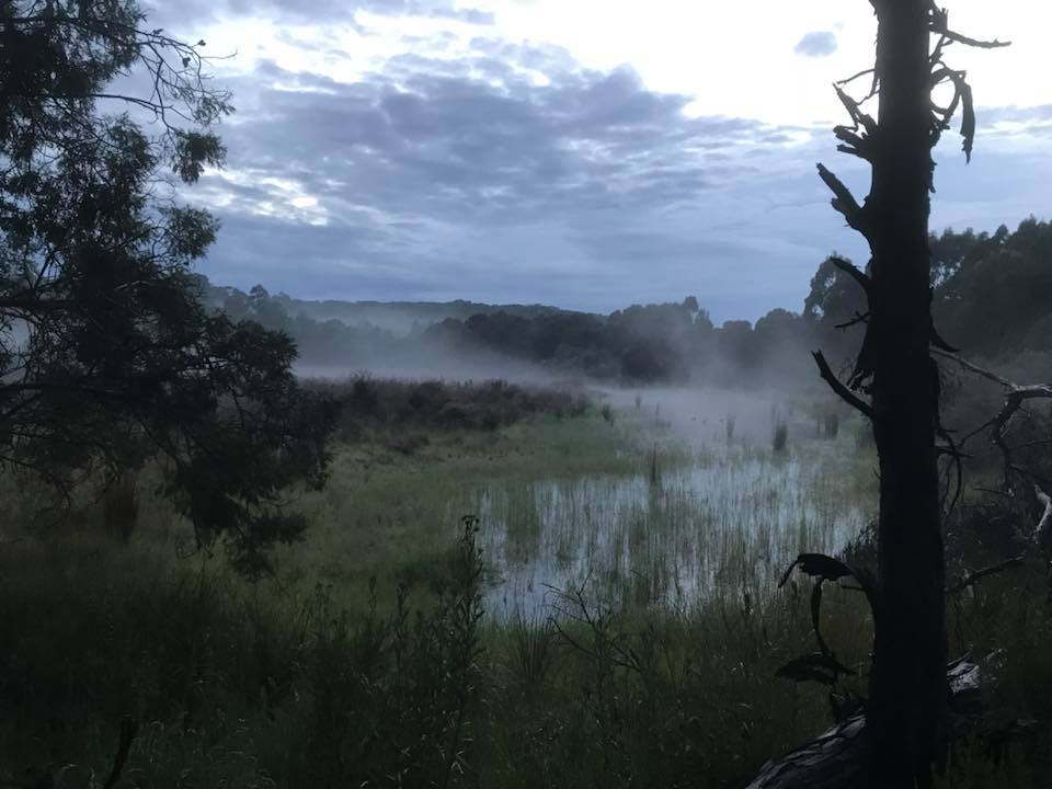 Nerrina wetlands 6am Oct 2017